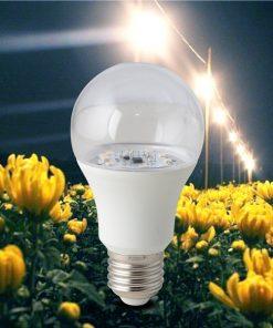 Đèn LED hoa cúc A60.HC/9W E27 Rạng Đông
