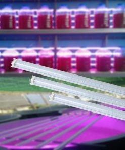 Đèn LED chuyên dụng trồng Tảo Rạng Đông