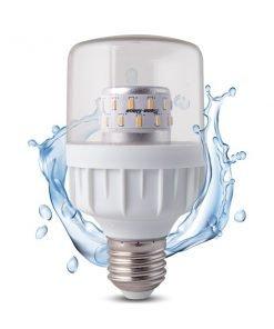 Bóng đèn LED chuyên dụng cho hoa cúc miền bắc Rạng Đông
